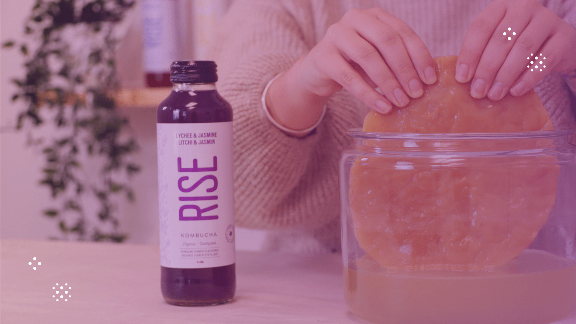 RISE kombucha placed next to SCOBY bacteria